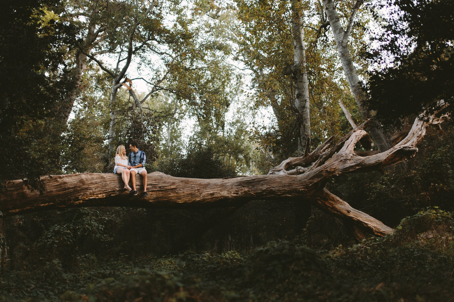Forest-engagement11